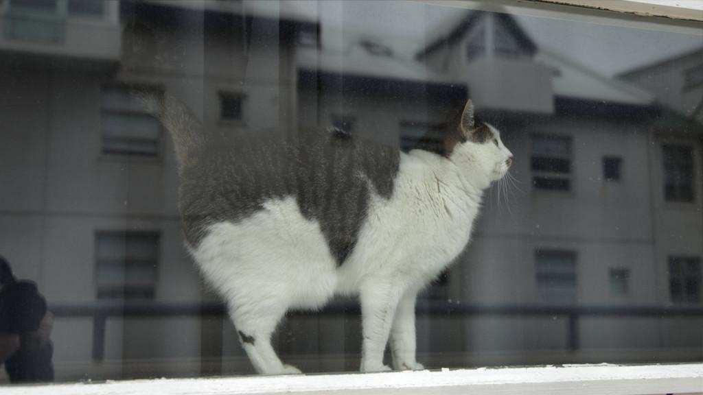 131015_9754_cat