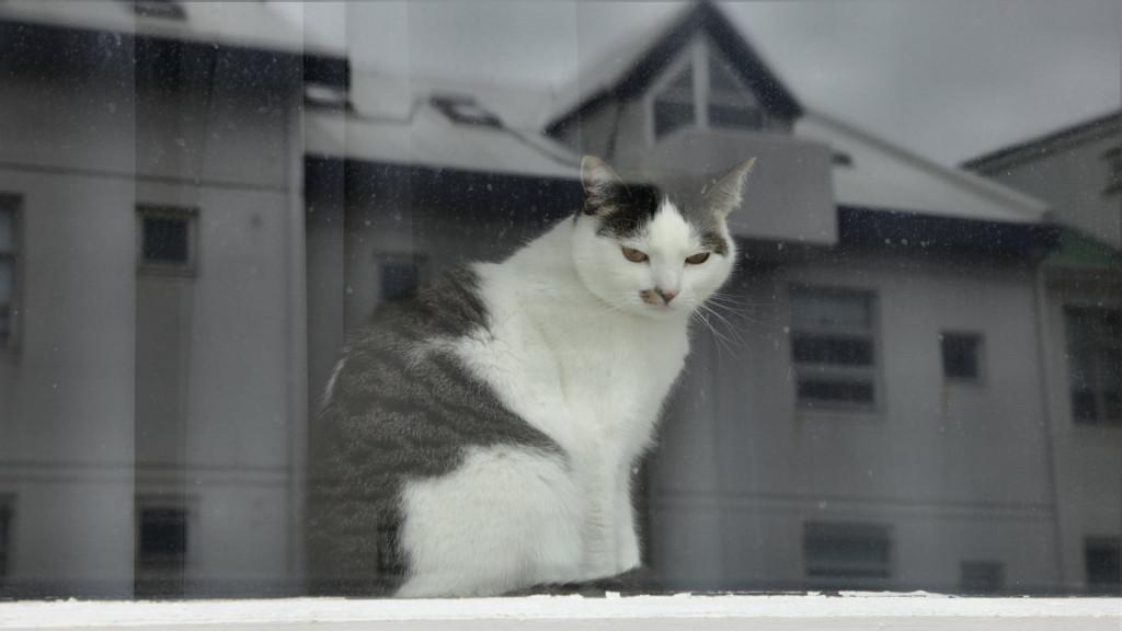 131015_9810_cat