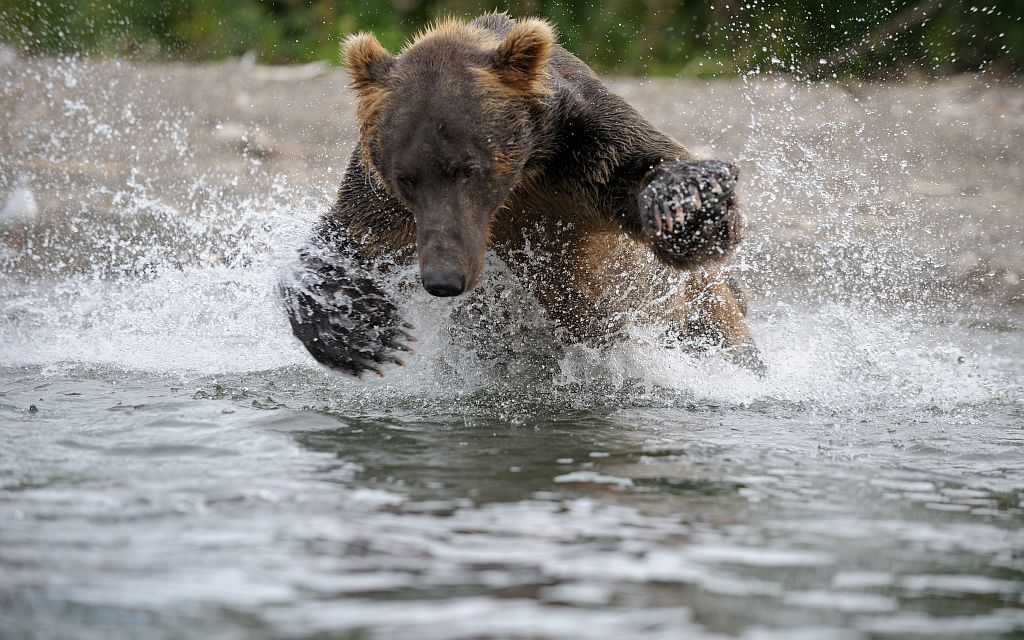 670793_original_bear_small