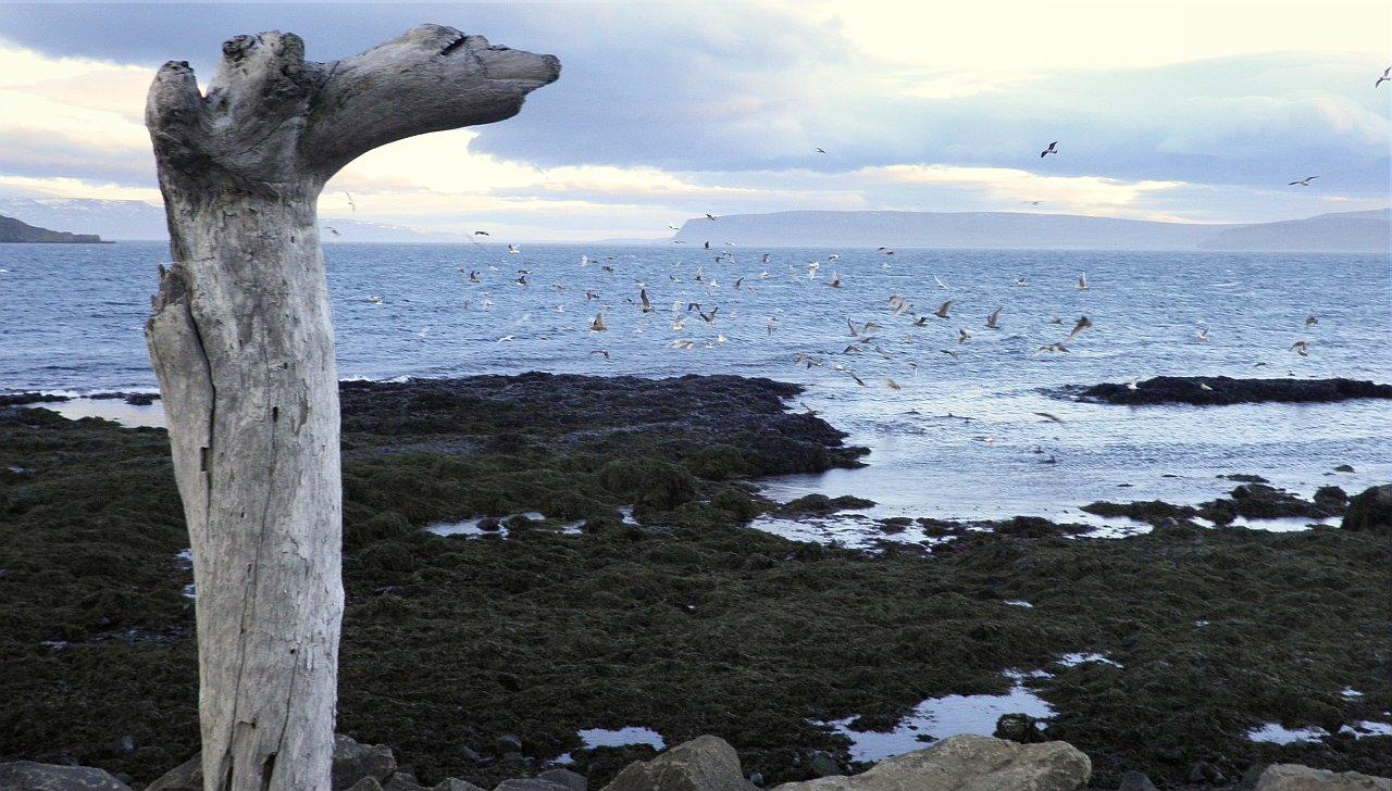 Drangsnes, Iceland, Исландия, ruslendingur;